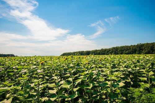 Kostnadsfri bild av atmosfär, bondgård, grön, himmel