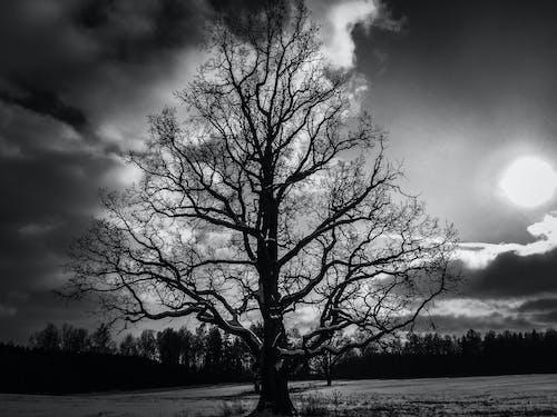 겨울, 격리, 나무, 블랙 앤 화이트의 무료 스톡 사진