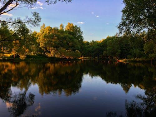 날씨, 숲, 여름, 자연의 무료 스톡 사진