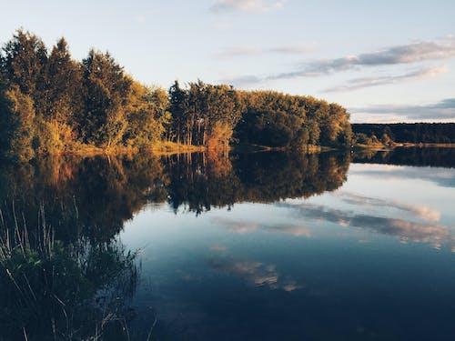 숲, 여름, 자연, 자연 사진의 무료 스톡 사진