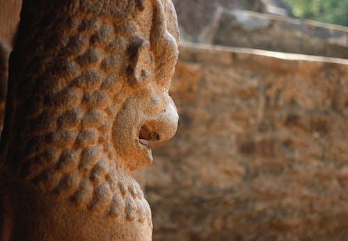 Бесплатное стоковое фото с индия, колонна, лев, махабалипурам