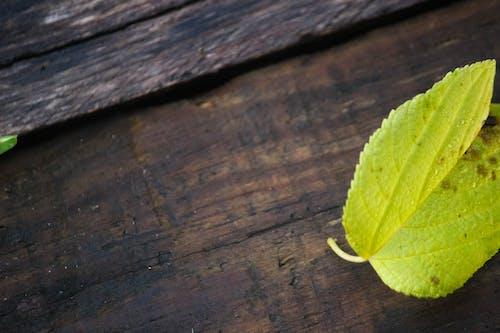 Immagine gratuita di foglia verde su sfondo di legno, verde acceso