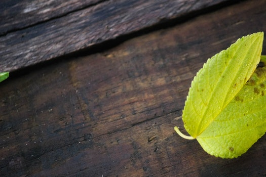 Free stock photo of leaf, bright green, green leaf on wood background