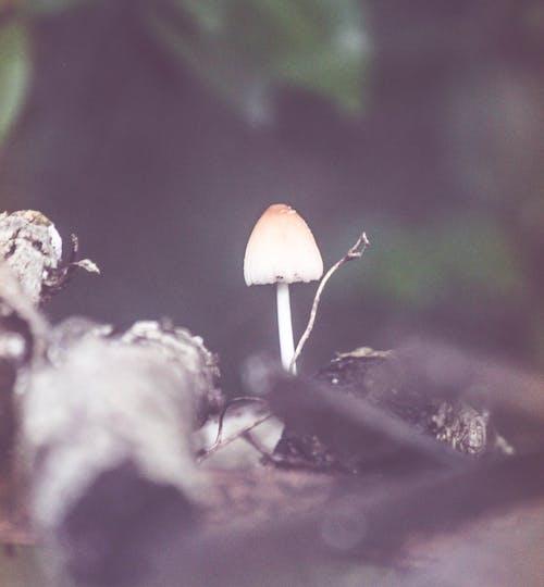 Kostnadsfri bild av mystisk, skog, svamp
