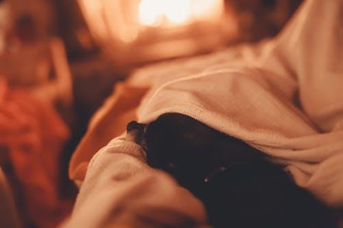 Foto d'estoc gratuïta de acollidor, cabana de fusta, cadell, calor