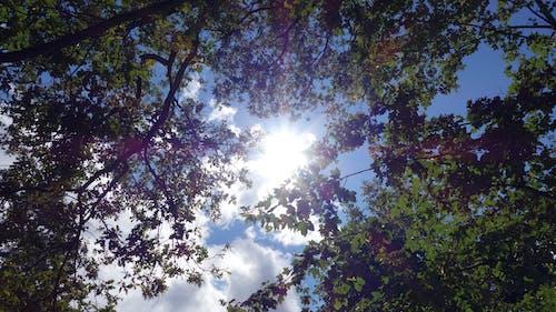 Foto d'estoc gratuïta de bosc, bosc verd, efecte solar, sol