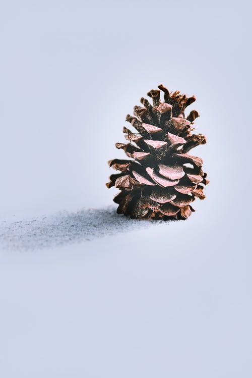Brown Pinecone on Snow Field