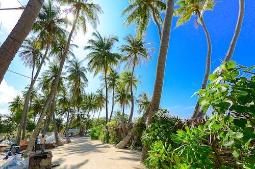 Бесплатное стоковое фото с деревья, кокосовые пальмы, остров, пальмовые деревья