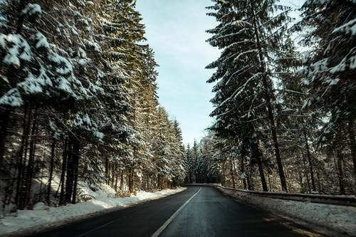 Asphalt Road Surrounded By Pine Trees