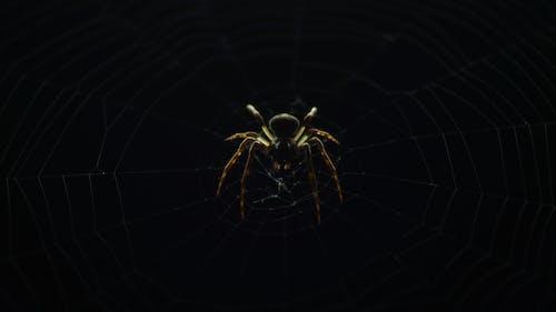 Základová fotografie zdarma na téma pavoučí síť, pavouk