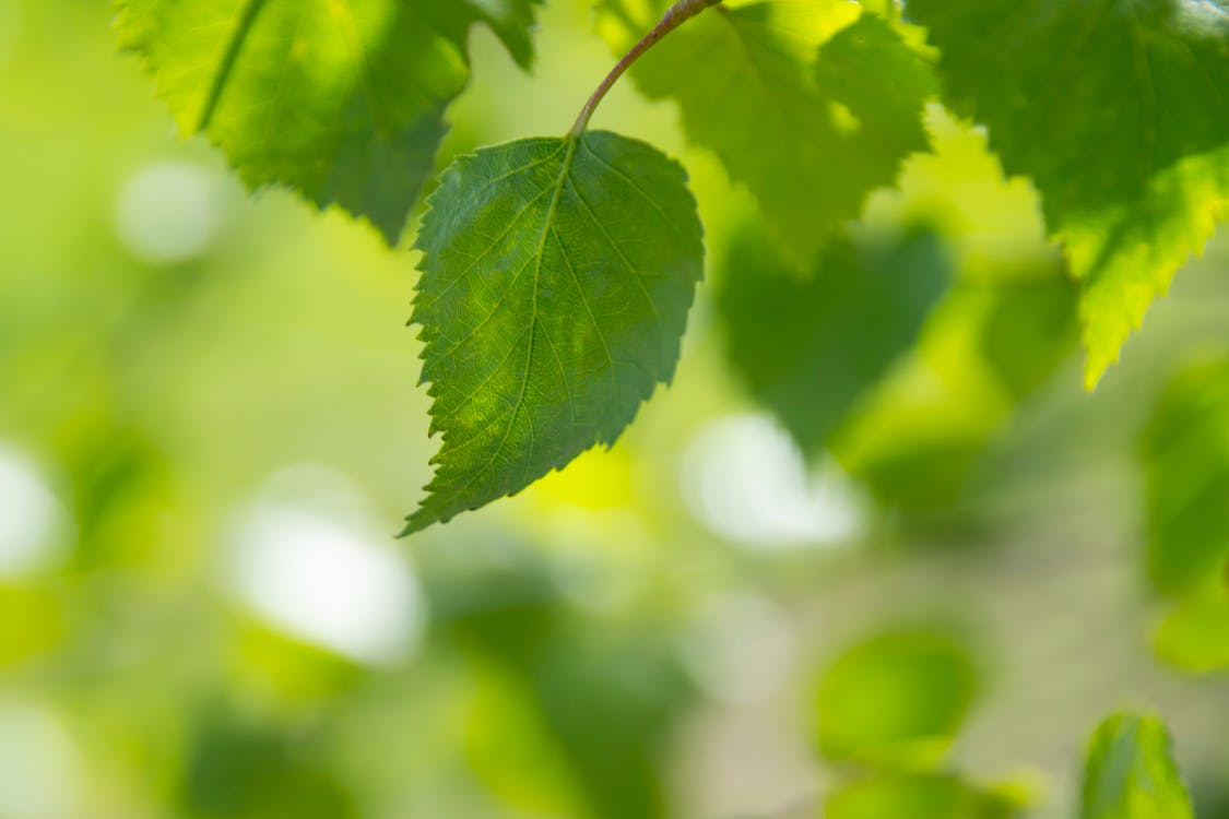 Selective Focus Photography of Ovate Leaf