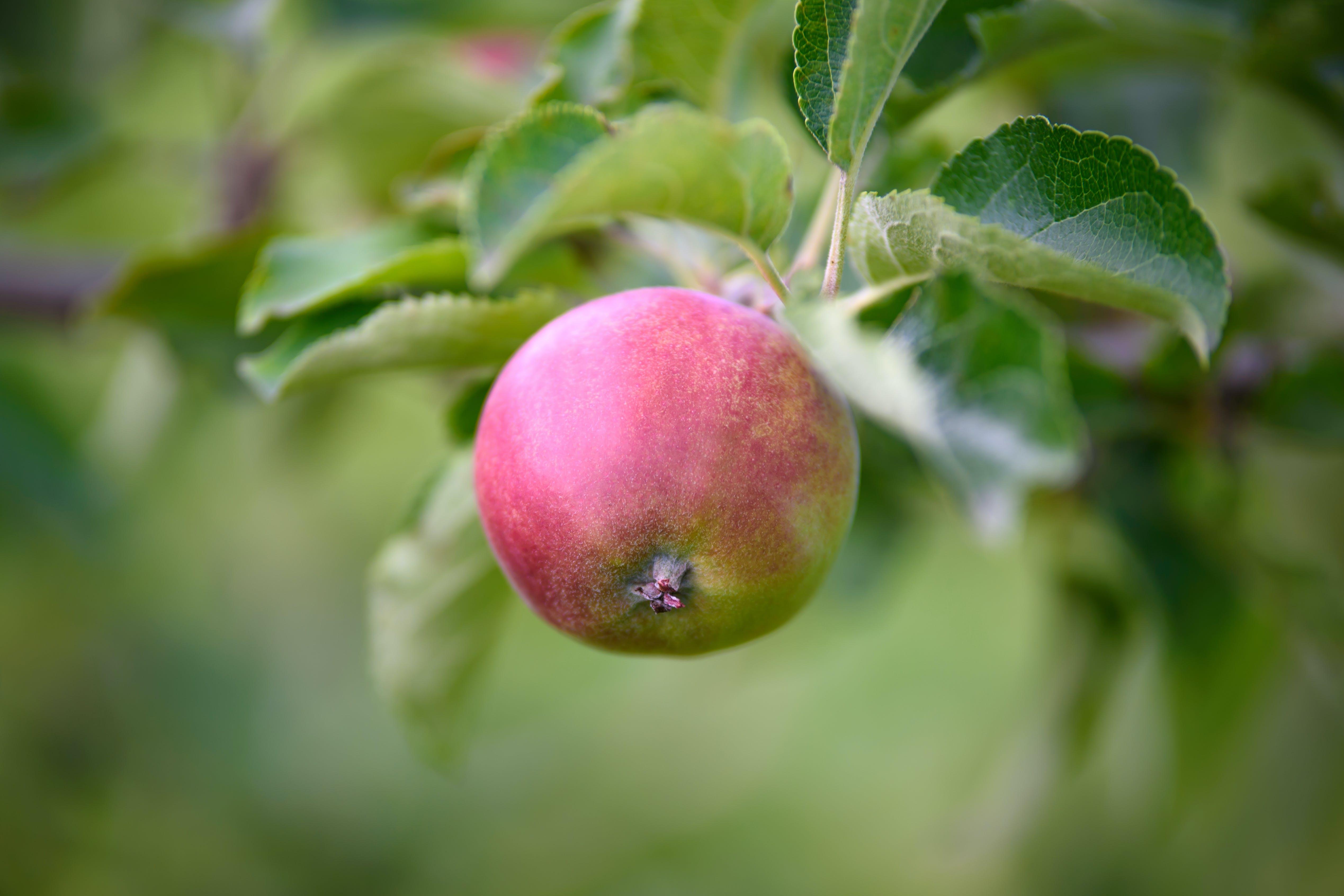 apple, blur, bright