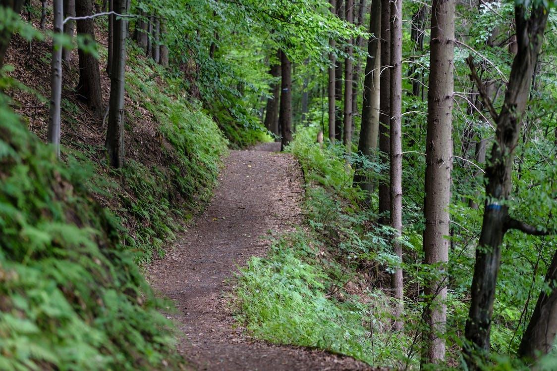 Leere Straße, Umgeben Von Grünen Bäumen