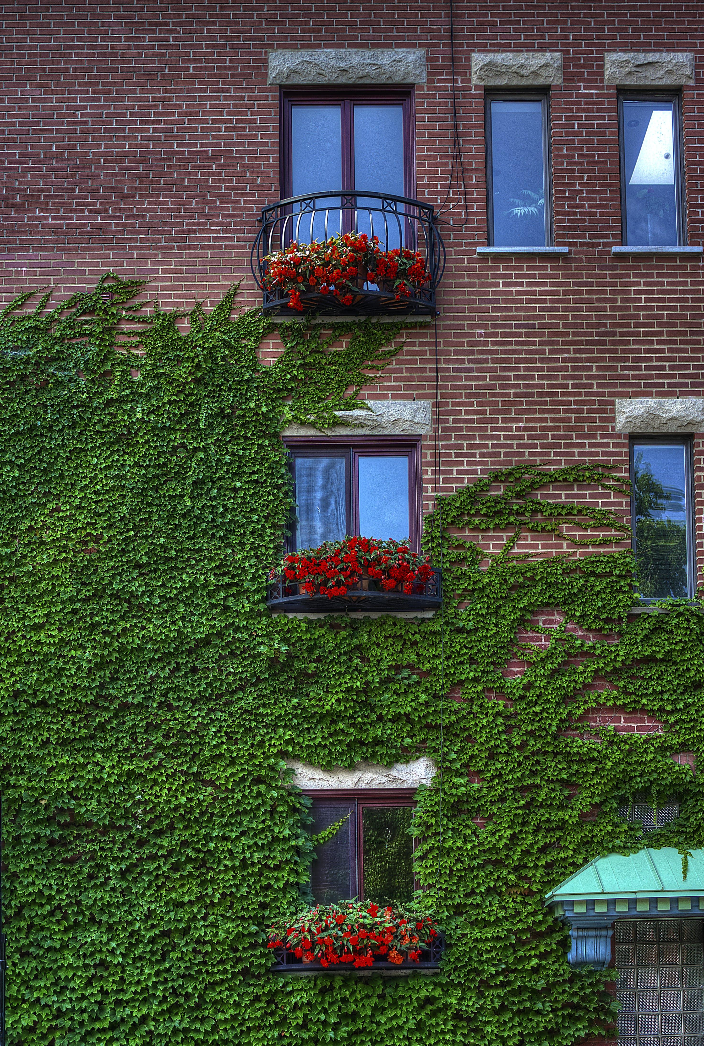 Gratis lagerfoto af blomster, bygning, røde mursten, udsatte mursten