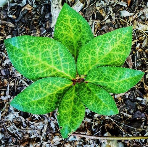 Foto profissional grátis de estrutura foliar, folhas serrilhadas, folhas verdes, fundo verde