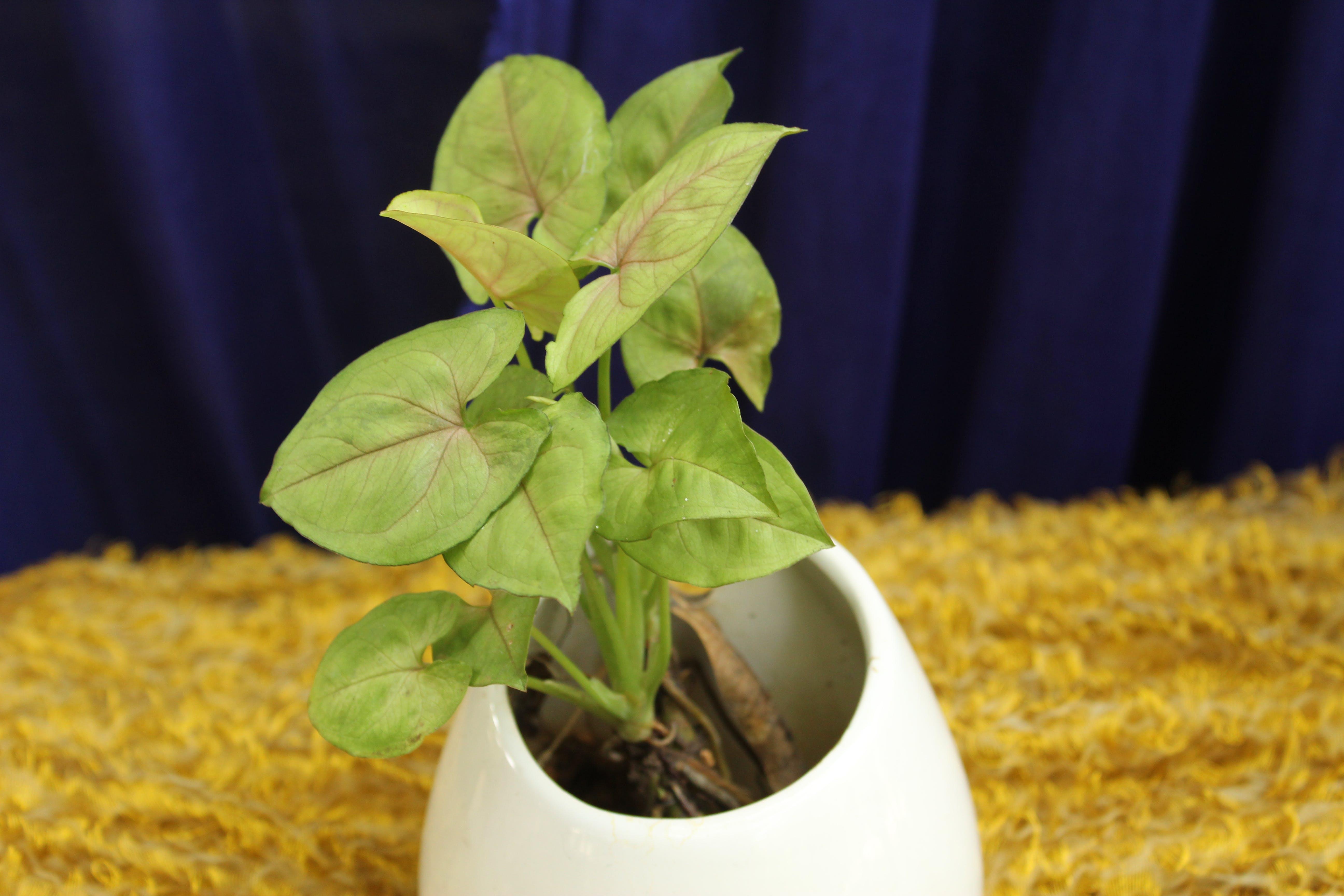 Kostenloses Stock Foto zu grüne pflanzen, innenanlagen, innenhaus, natur