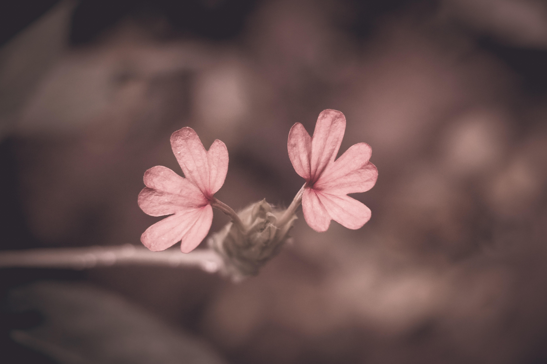 Free Stock Photo Of Beautiful Flower Desktop Wallpaper Flower