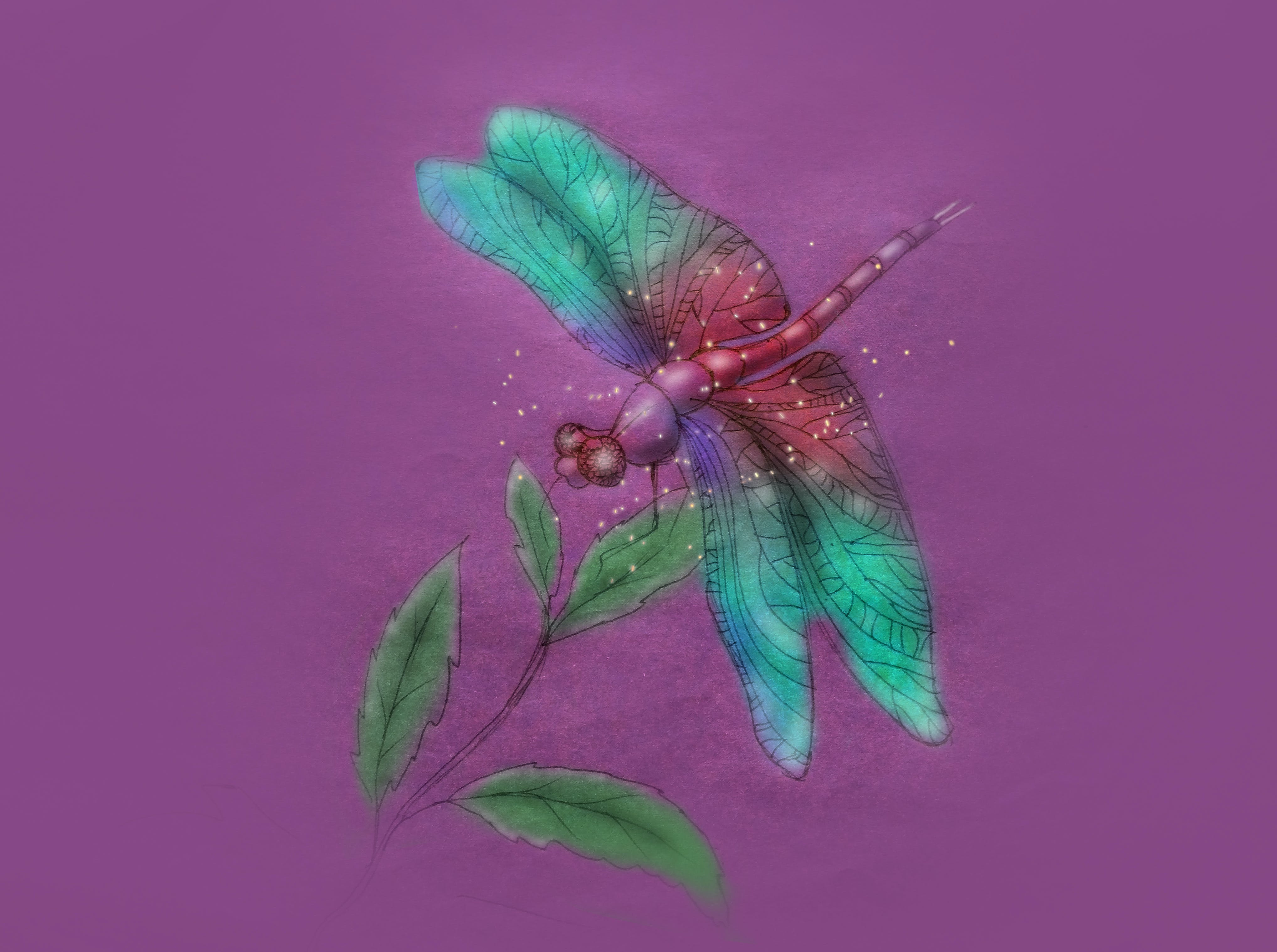 of dragonfly
