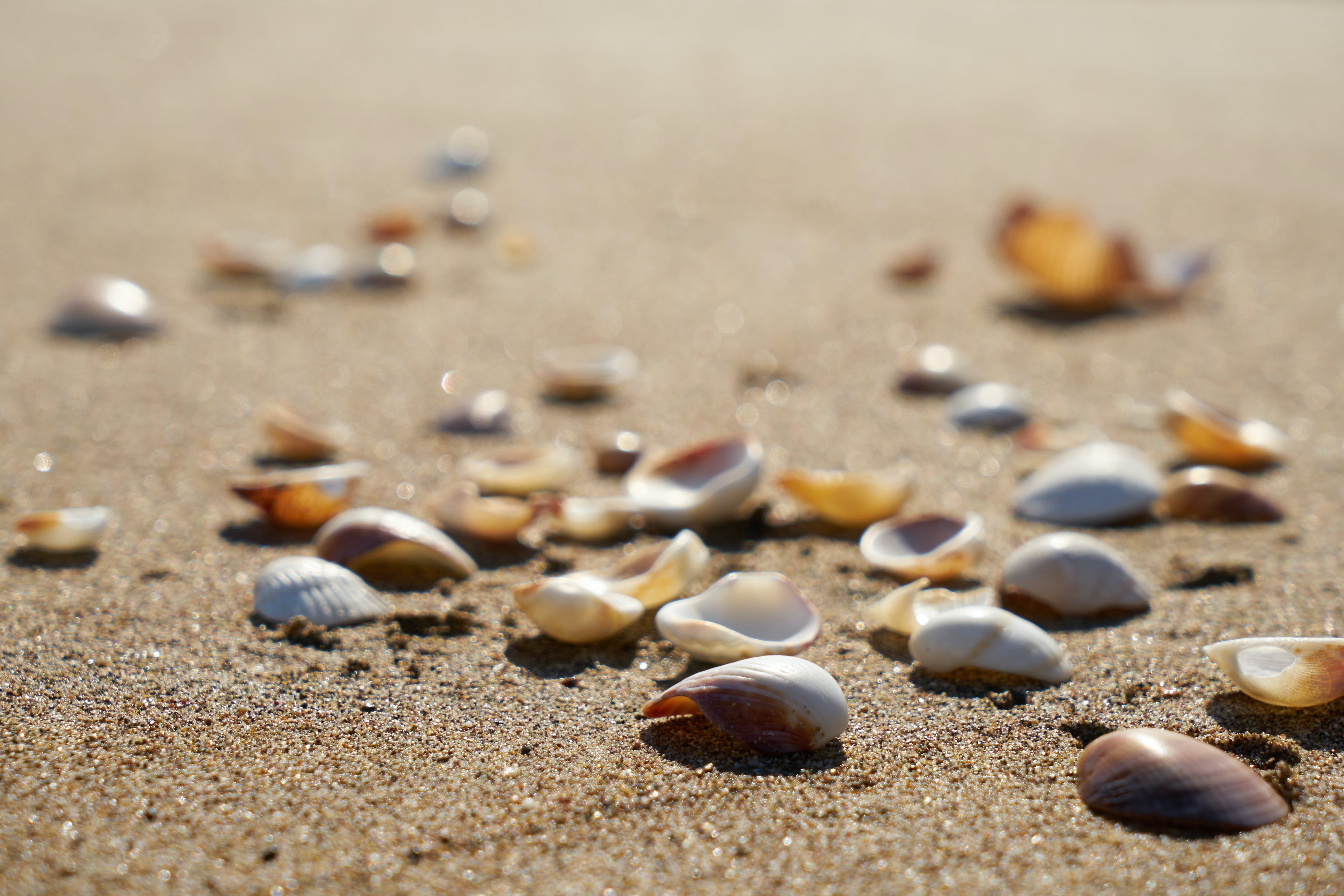 Selective Focus Photography of Shells on Sand