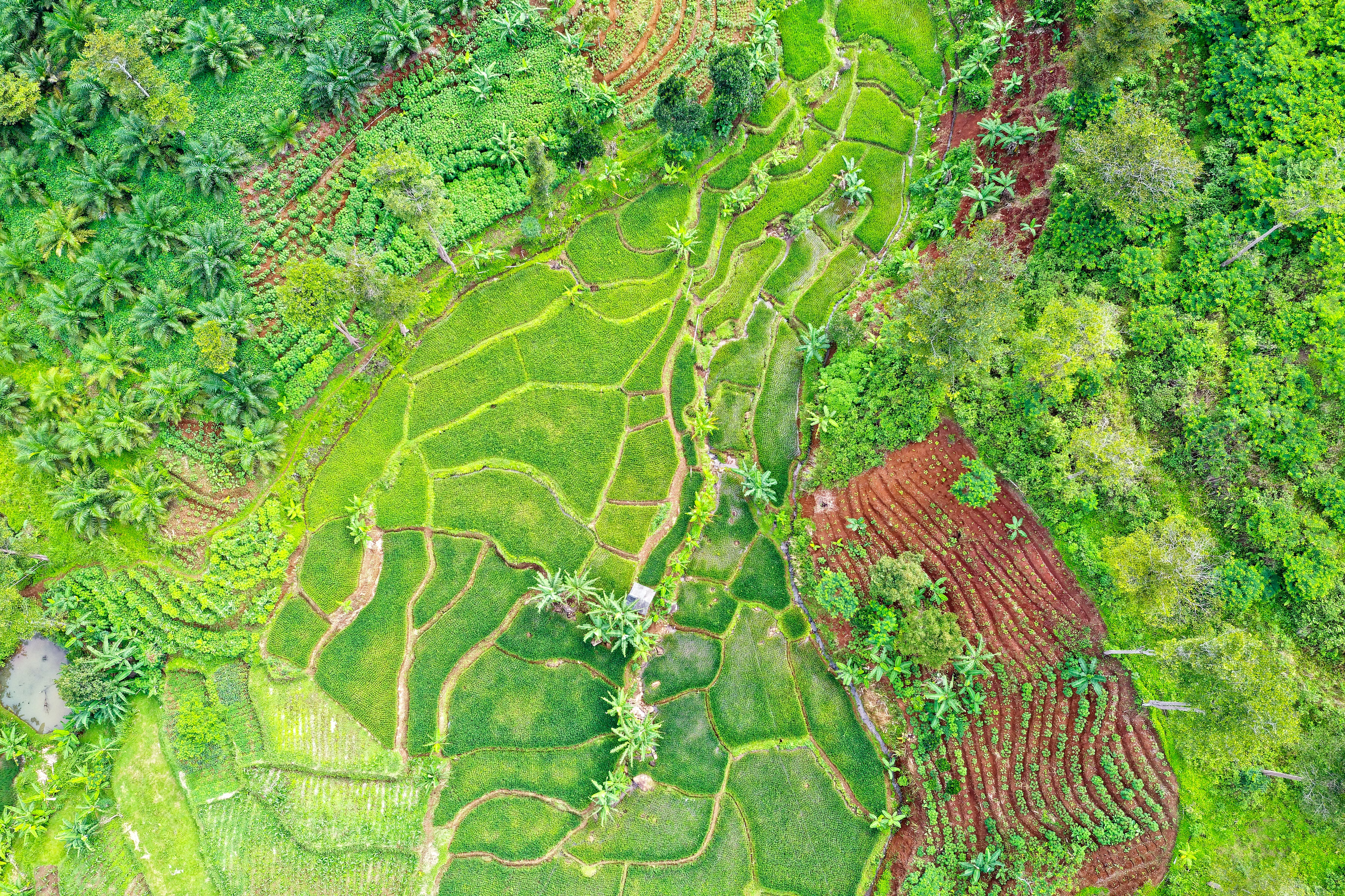 Top View Photography Of Fields