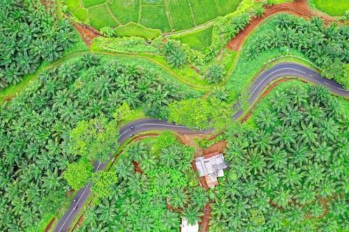 Imagine de stoc gratuită din câmp, de deasupra, fermă, fotografie cu drona