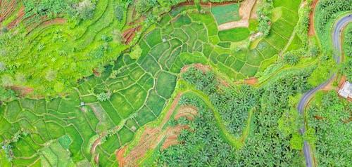 คลังภาพถ่ายฟรี ของ การทำฟาร์ม, การเจริญเติบโต, ต้นไม้, ทางอากาศ