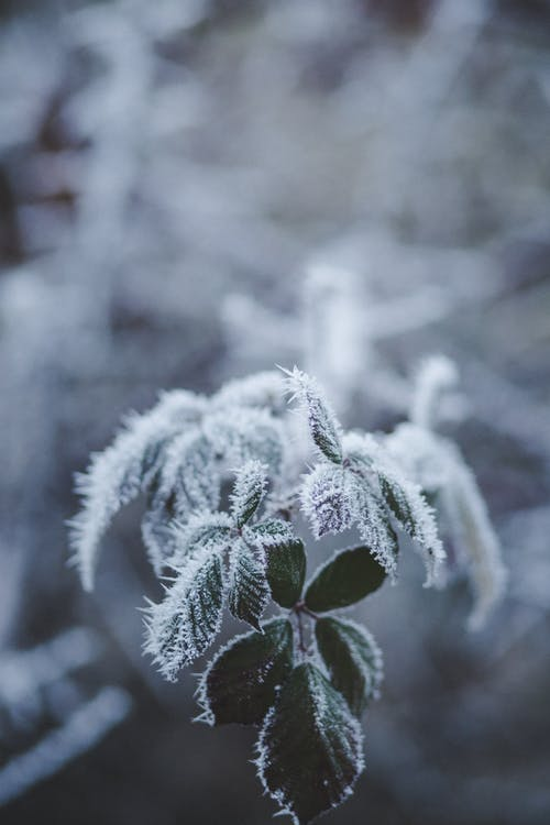 Selective Focus Photography of Frozen Leaves