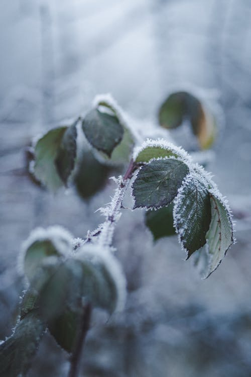 Close-Up Photo of Frozen Leaves