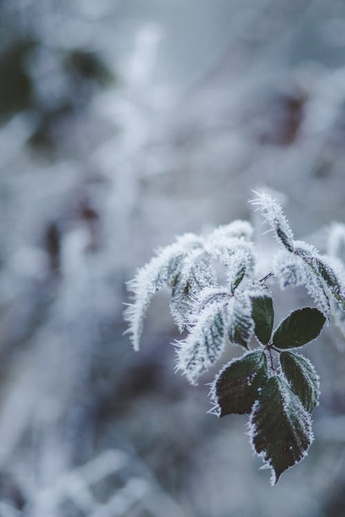 Shallow Focus Photography Of Frosted Plant