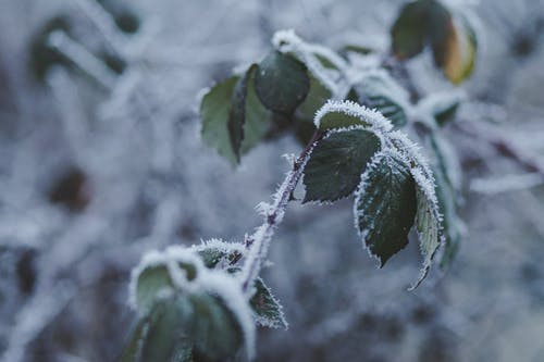 Бесплатное стоковое фото с завод, мороз, простуда, растение