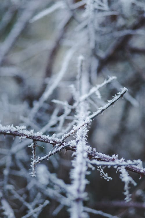 Gratis stockfoto met ijs, winter