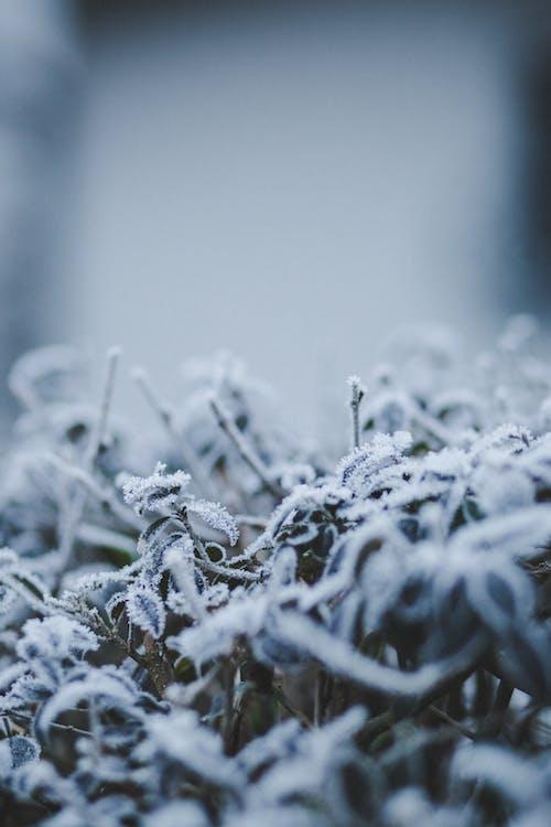 ijs, sneeuw, winter