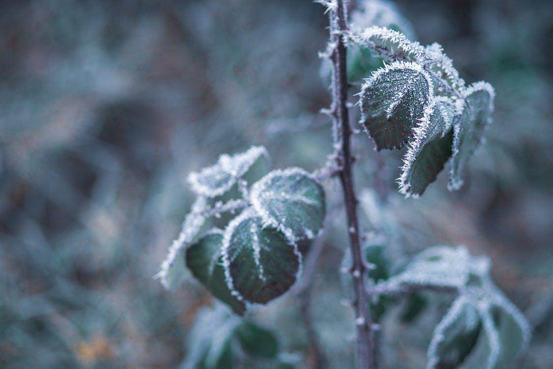 concentrar-se, congelant, congelant-se