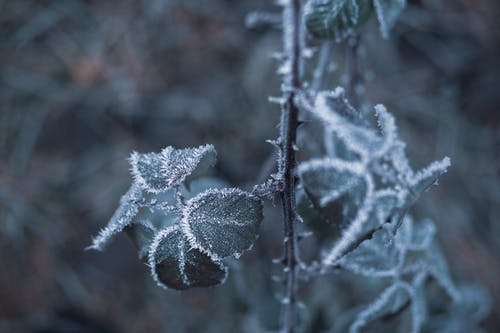 Бесплатное стоковое фото с выборочный фокус, зима, максросъемка, морозная погода