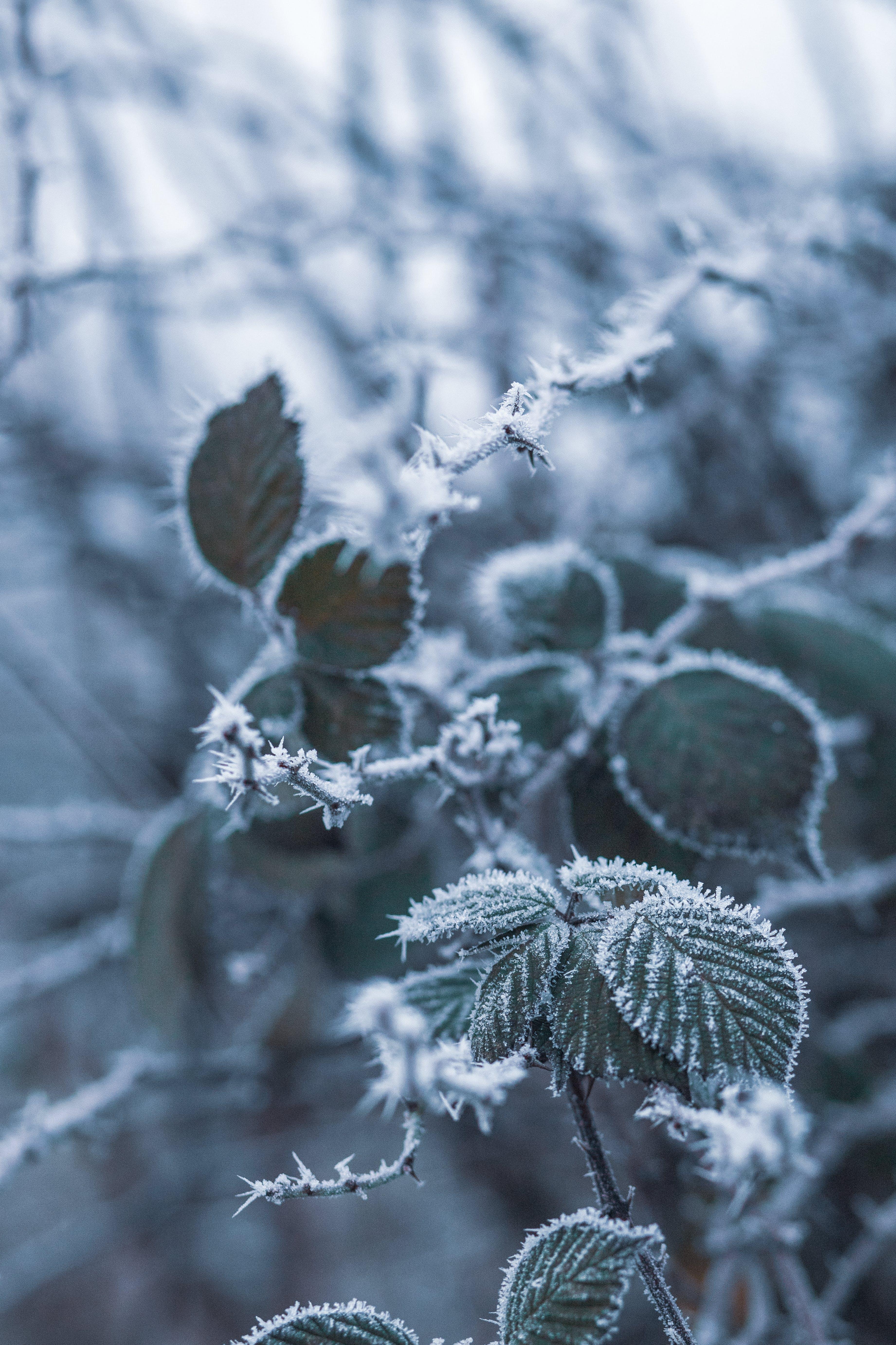 hloubka ostrosti, ledový, mráz