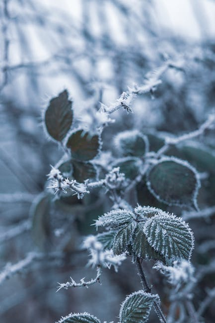 Close up photo of leaves covered with snow