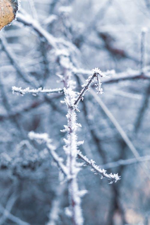 Бесплатное стоковое фото с зима, лед, снег