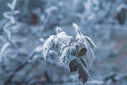 Green-leafed Plant Covered by Snow