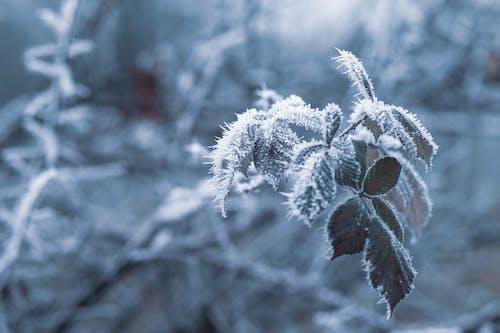Ilmainen kuvapankkikuva tunnisteilla jää, lumi, talvi