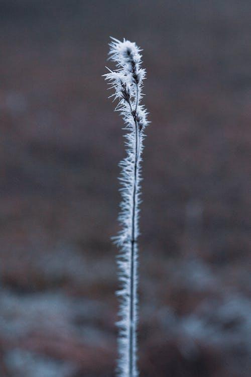 Бесплатное стоковое фото с зима, лед, хлопья снега