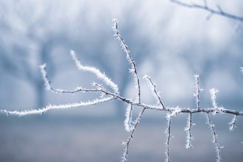Бесплатное стоковое фото с зима, лед, максросъемка, простуда