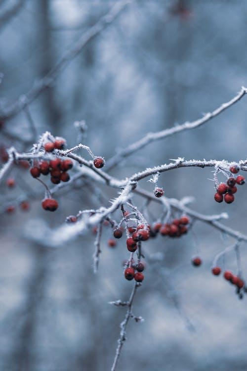 rowanberry, 下雪的, 下雪的天氣