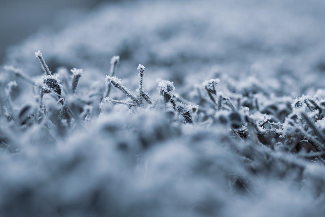 anläggning, fabrik, frost