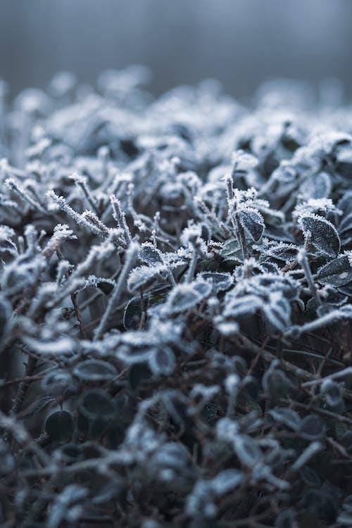 congelato, cristallo, erba