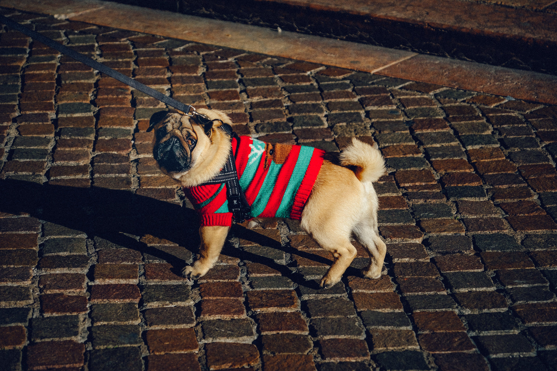 Photo of Dog Wearing Dog Coat