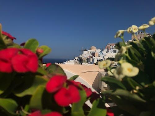 그리스, 꽃, 블루, 산토리니의 무료 스톡 사진