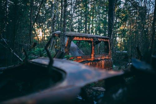 Základová fotografie zdarma na téma auto, hřbitov, les, odpad