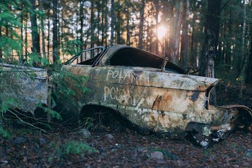 Základová fotografie zdarma na téma auto, hřbitov, klasický, les