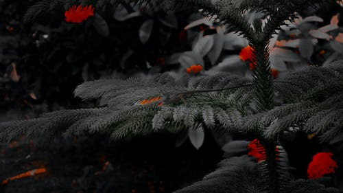 深紅, 漆黑, 黑色 的 免費圖庫相片