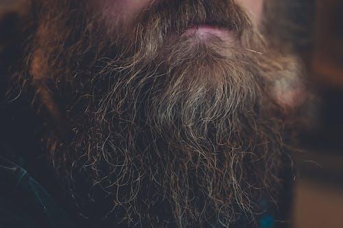 Foto d'estoc gratuïta de adult, barba atofada, bigoti, buscant